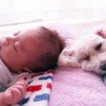 赤ちゃん 眠り わんちゃん